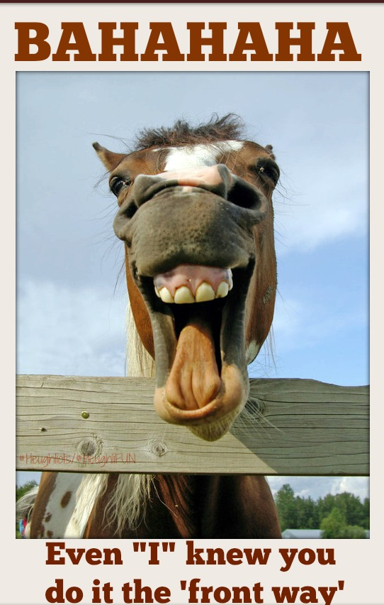 laughing-animals-horse