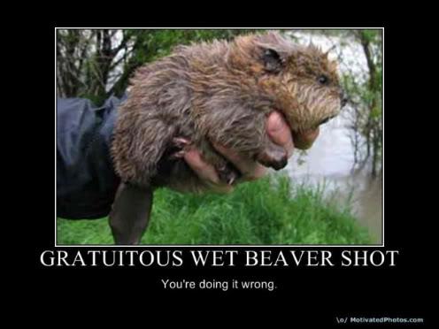 wet-beaver