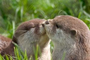 Oh you guys really OTTER make up